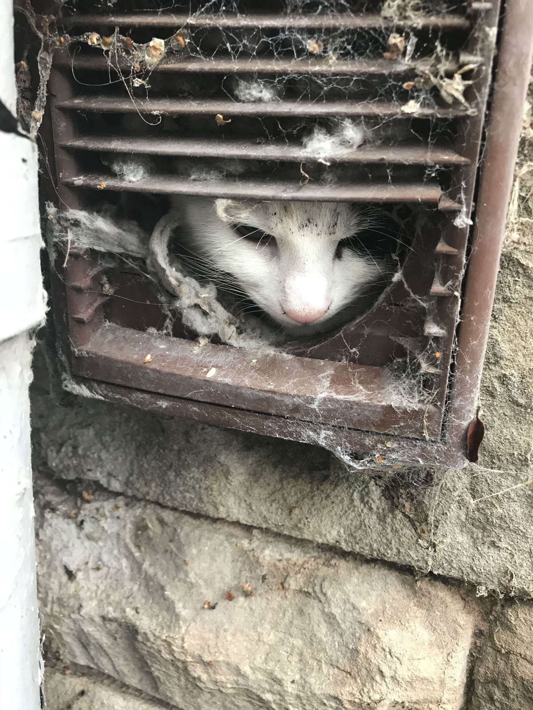 Cat Gets Stuck in Laundry Vent, Needs to Be Buttered Up to Get Out