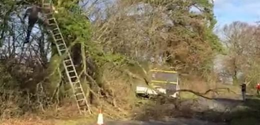 Tree surgeon takes tumble after attempt at cutting branch goes wrong