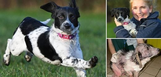 Spaniel dumped at the side of the road is back bouncing on her feet