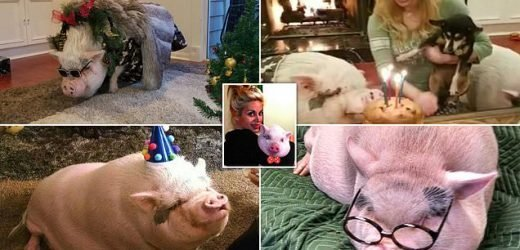Pig celebrates fifth birthday with birthday cake and Gucci glasses