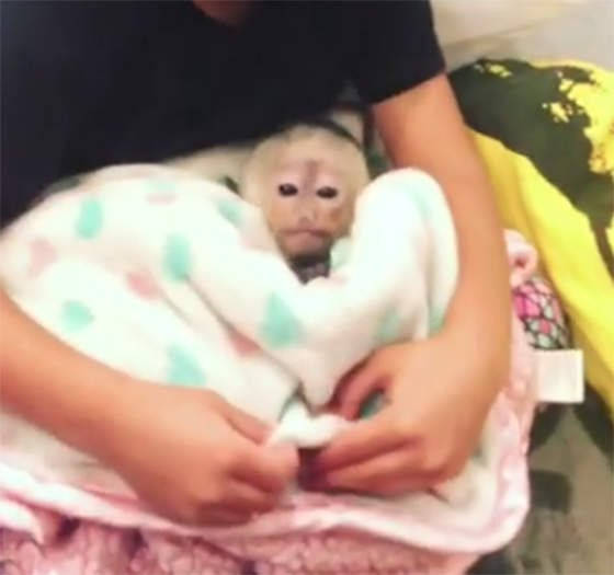 Chris Brown Is In Legal Trouble Again, This Time Because Of His Illegal Pet Monkey