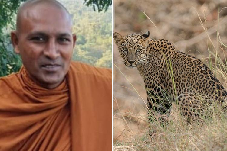 Leopard kills Buddhist monk meditating under a tree in a protected big cat reserve
