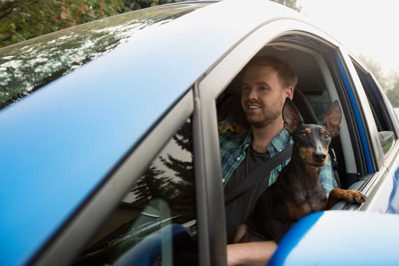 New Distracted Driving Law Takes Aim at Those Who Drive with Pets in Their Laps