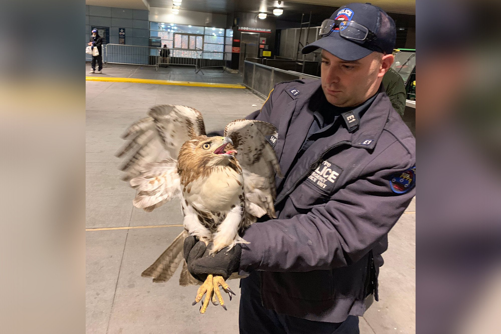 NYPD officer rescues hawk trapped in Penn Station