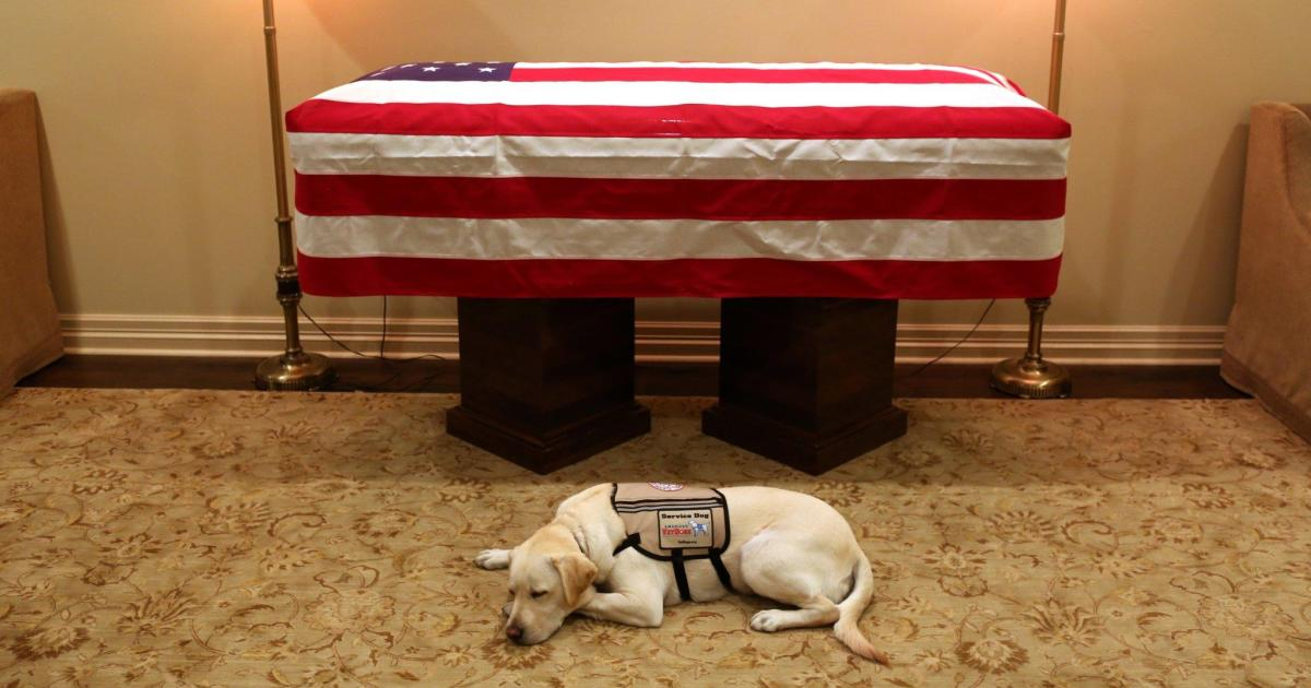 George H.W. Bush's service dog Sully lays by his casket in Houston