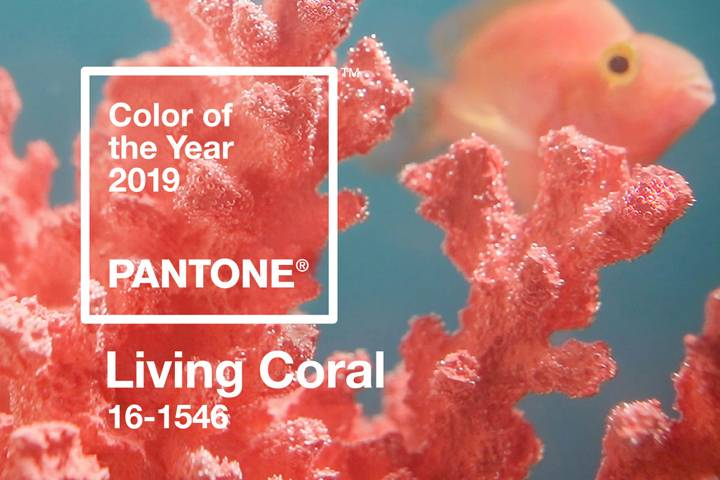 'Living Coral' is Pantone's 2019 colour of the year