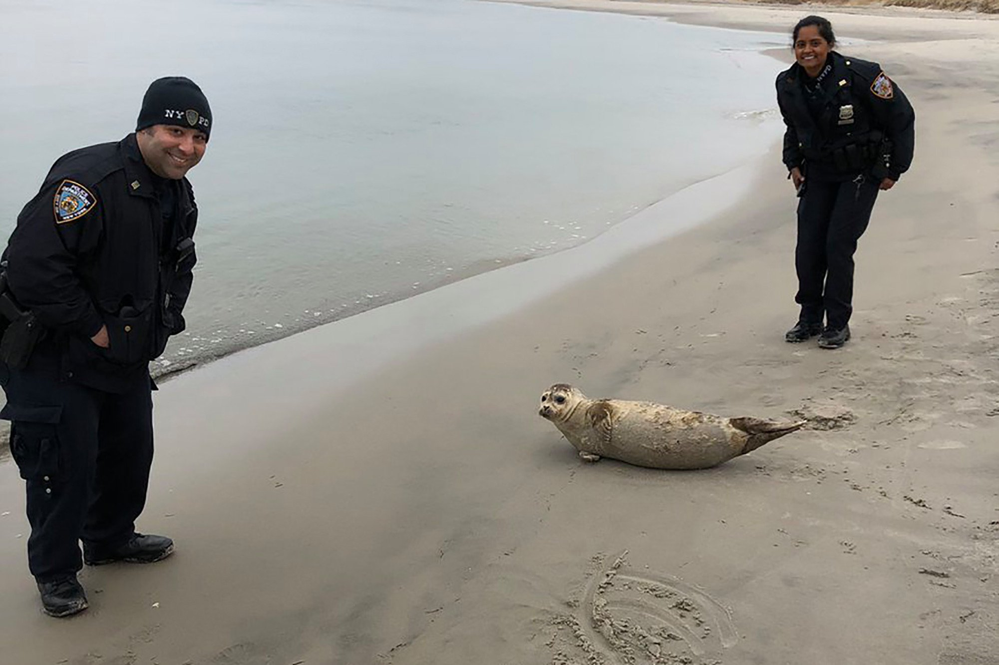 NYPD officers guide seal back to ocean in Queens