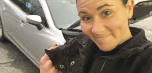 South Carolina Police Save Kitten Stuck Under Hood of Car
