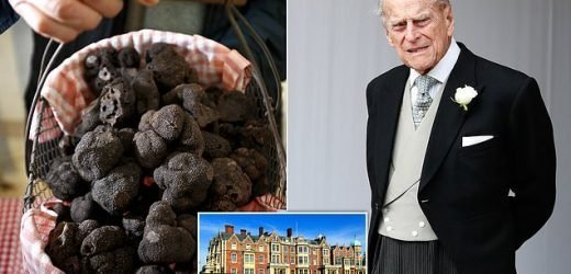 Prince Philip grows prized black truffles at Sandringham