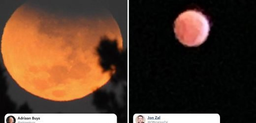 Stargazers post their pics of rare Super Wolf Blood Moon – but some are less than impressed