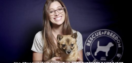 Help Animals in Need by Sharing Your Story of Pet Adoption