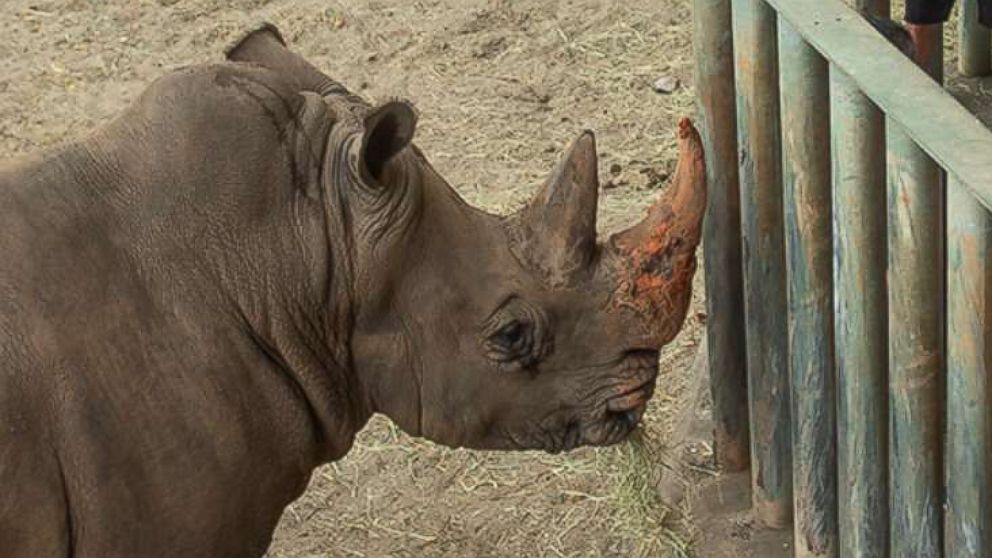 2-year-old injured after falling into rhino enclosure discharged from hospital