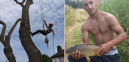 Giant oak crushed tree surgeon in his 20s to death in freak accident