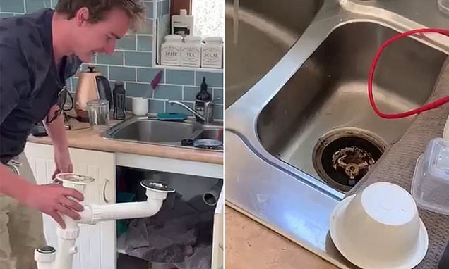 Deadly brown snake gives homeowner that sinking feeling