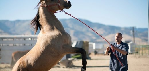 Sundance Film Review: 'The Mustang'