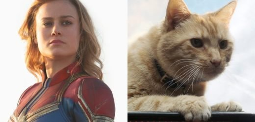 Brie Larson: Captain Marvel's Cat Goose Is a Big Obstacle During Filming