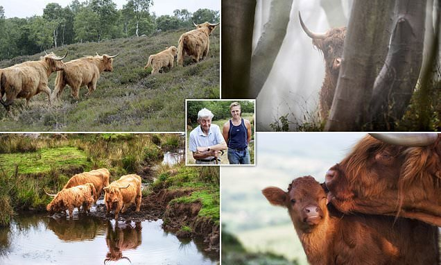 'Heartbroken' Highland cows owner must sell or slaughter his herd