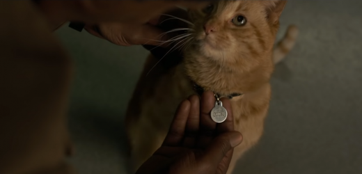 Twitter Can't Handle This Hilarious 'Captain Marvel' Goose Easter Egg In 'Winter Soldier'