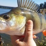 Gone fishing: Lake Burley Griffin a hotspot for redfin anglers
