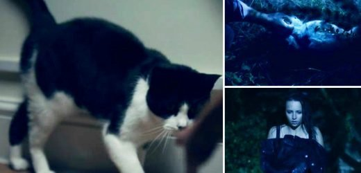 Cheat viewers furious as show kills off Betsy the cat in the first episode