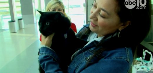 Cat Lost In Calif. Wildfire Found 102 Days Later, Will Reunite with Family in Missouri