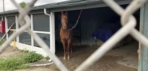Following deaths of 21 horses, California racetrack imposes new safety, welfare rules