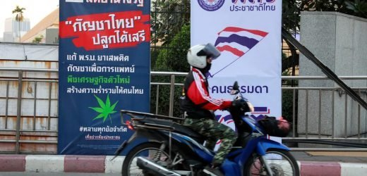 Green economy? Thai party campaigns on marijuana as cash crop