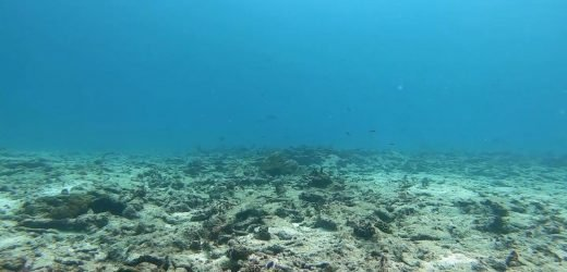 Deep Ocean Live: Climate change is killing the ocean's coral reefs