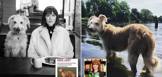 Writer whose dog went missing reveals Twitter campaign reunited them