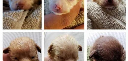 Woman Accused of Dumping Coachella Puppies Surrenders 38 Dogs, Puppies Under 'Great' Foster Care