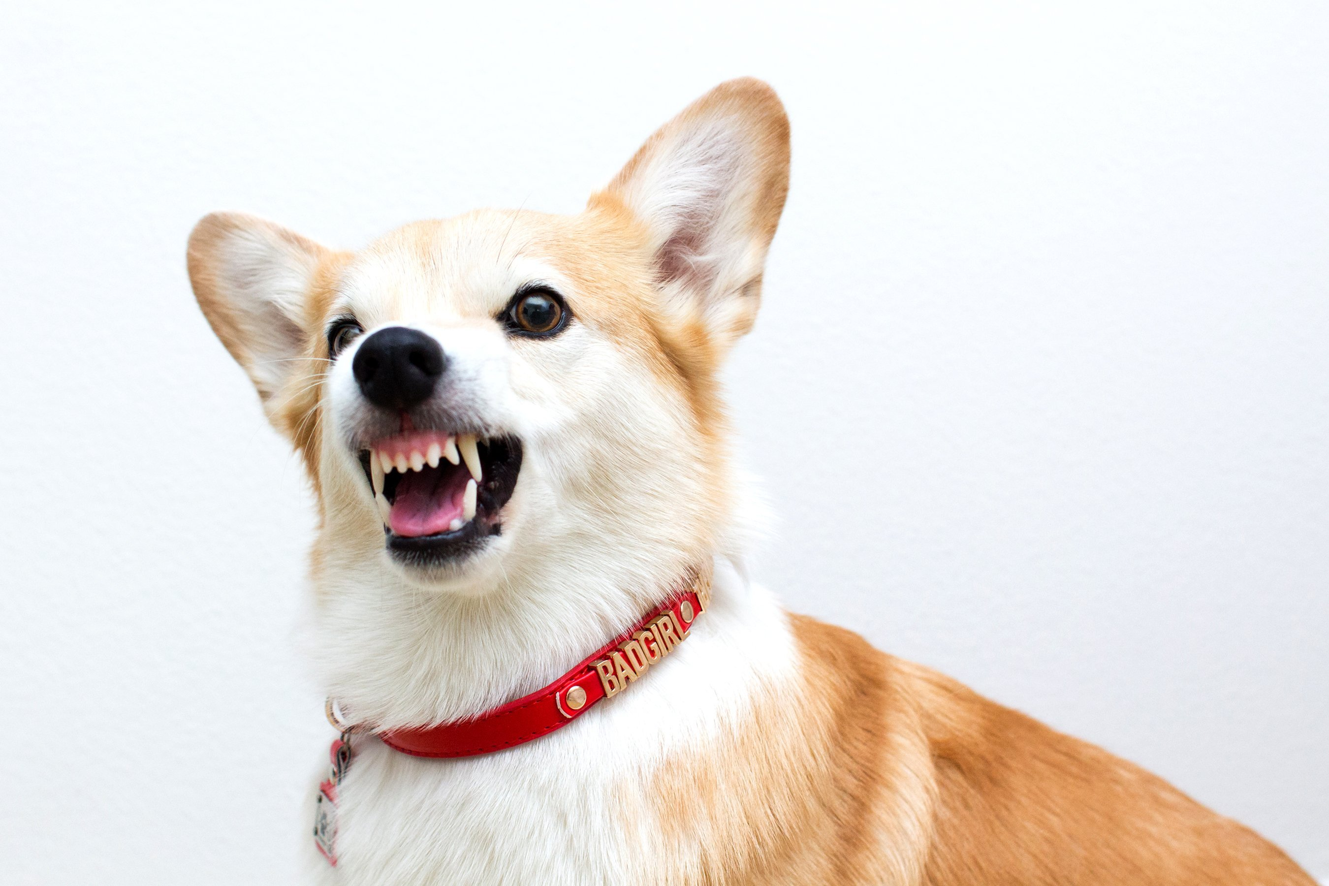 Dogs, Like People, Tend to Stay Away from 'Nasty' People Who 'Behave Negatively:' Study