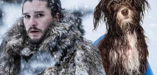 Kit Harington says Jon Snow smells like 'blood and wet dog'