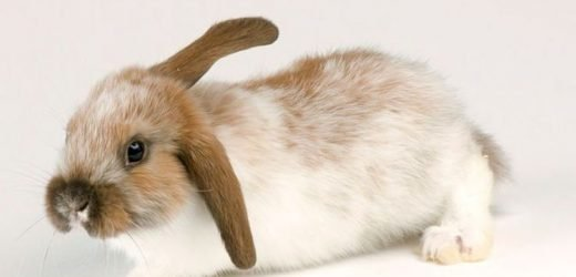 Bunnies are for life not just Easter, warn animal charities facing rise in pet dumping