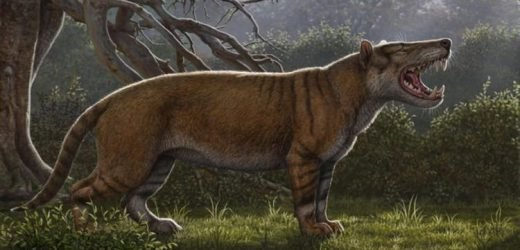 Prehistoric monster that makes today's lions look like moggies found in museum drawer
