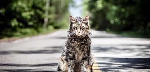 Cat from 'Pet Sematary' Dies Mysteriously Just Weeks After Film's Release