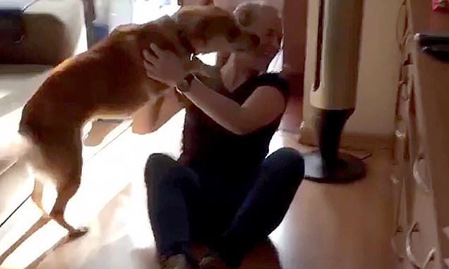 Dog gets overexcited after seeing owner who's been away for 3 years