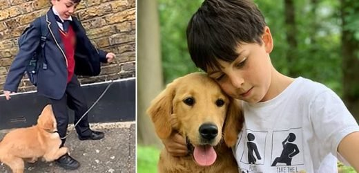 Puppy holds onto nine-year-old owner's leg to stop him going to school