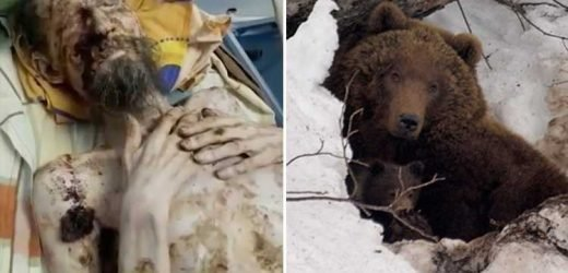 Man dragged away by a bear is found ALIVE one month later looking like a mummy after being stored inside its den as food – The Sun