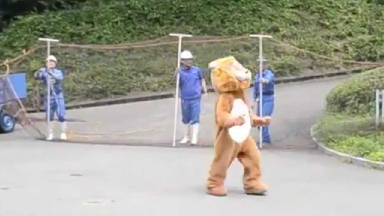 Zoo uses man dressed in a lion costume for escape drill