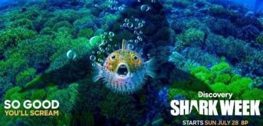 Thrash, bite and churn: Discovery's Shark Week 2019 full schedule and more!