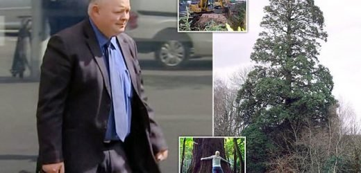 Tree surgeon 'mistakenly' chopped down one of Britain's first redwoods