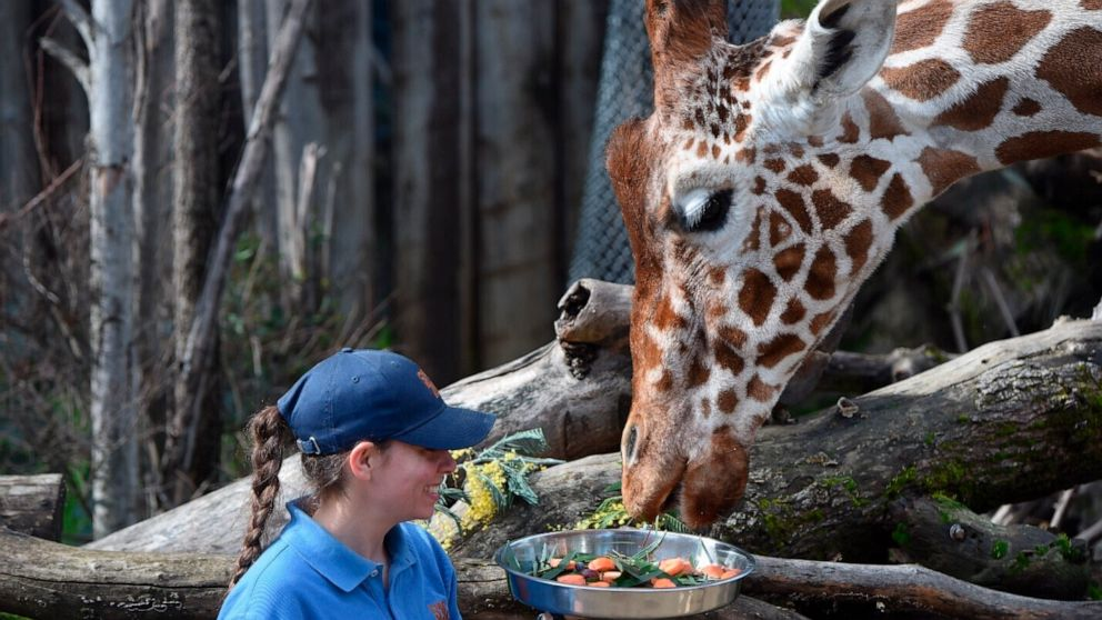 Sacramento Zoo temporarily closed after giraffe died