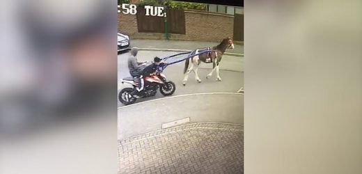 Footage shows two thieves riding a horse as they steal a motorbike