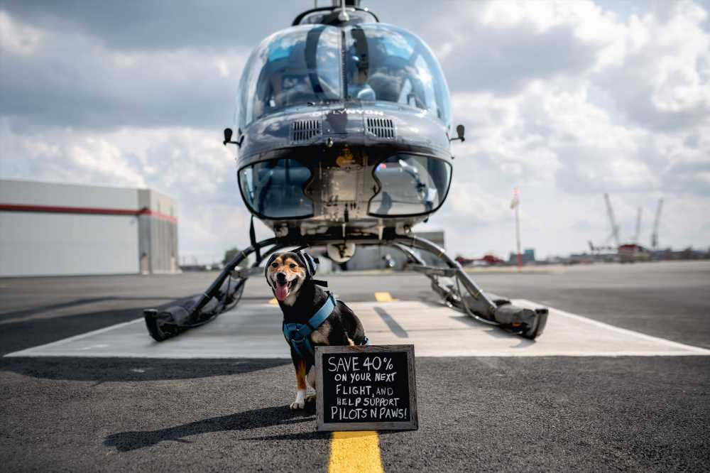 'Doors off' NYC chopper flights for dogs spark outrage