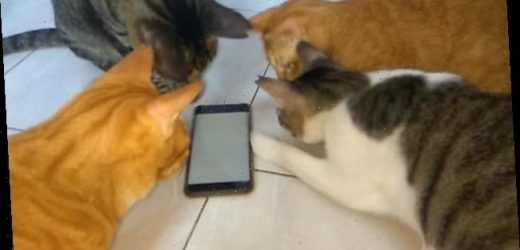 Cats try catching bugs running across a phone screen in game