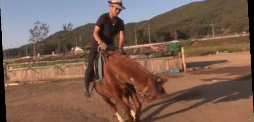 Lazy horse plays dead every time someone tries to ride him
