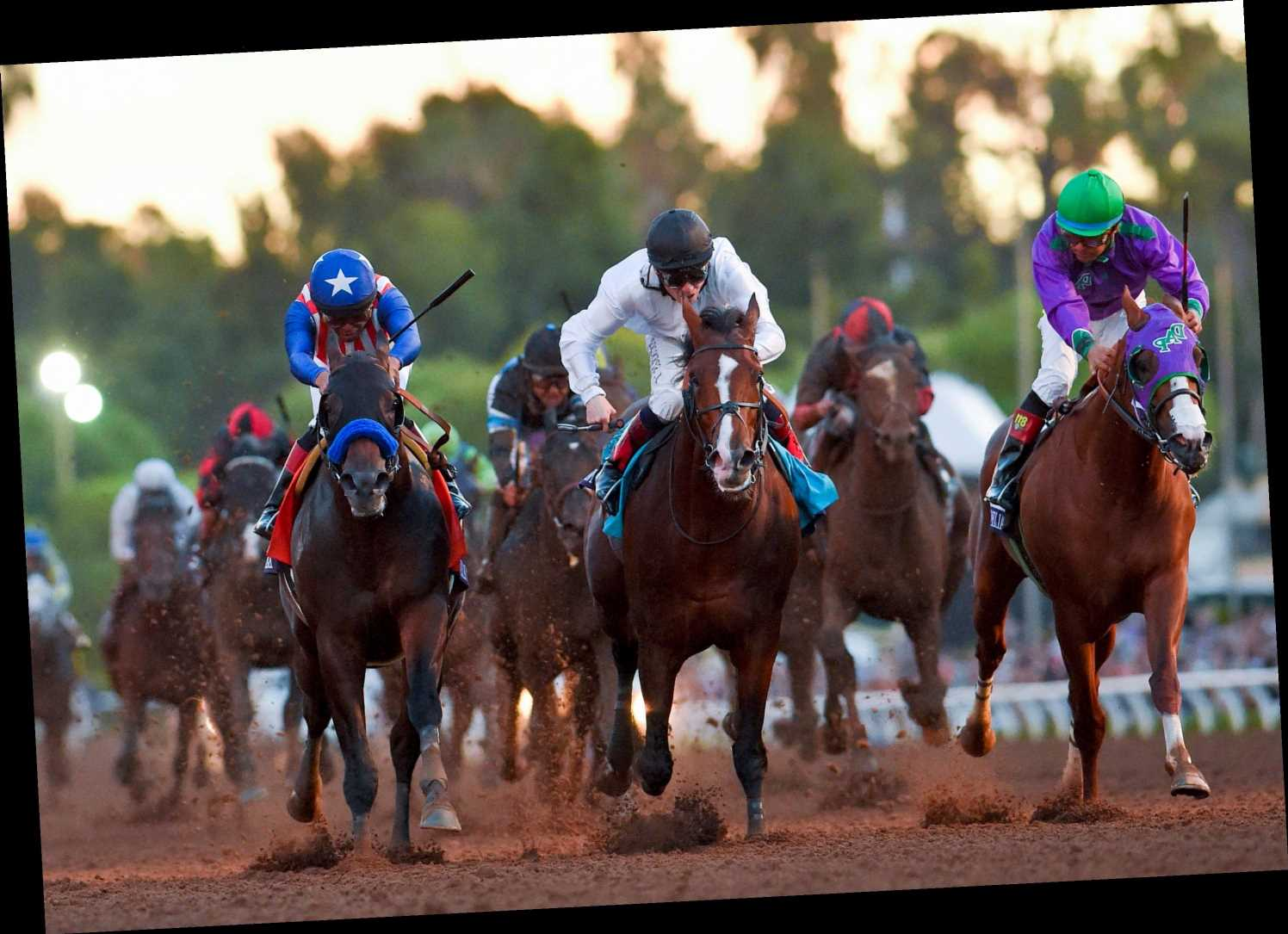 Breeders' Cup tips: Best bets for the racing at Santa Anita on Saturday night