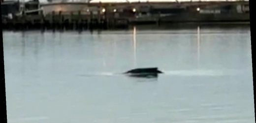Fears for humpback whale spotted in the River Thames