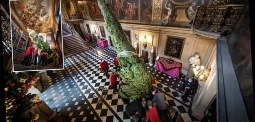 Workers set up 24ft tall Christmas tree at Chatsworth House