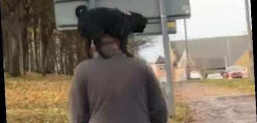 Dog owner strolls down street with a pug standing on his shoulders